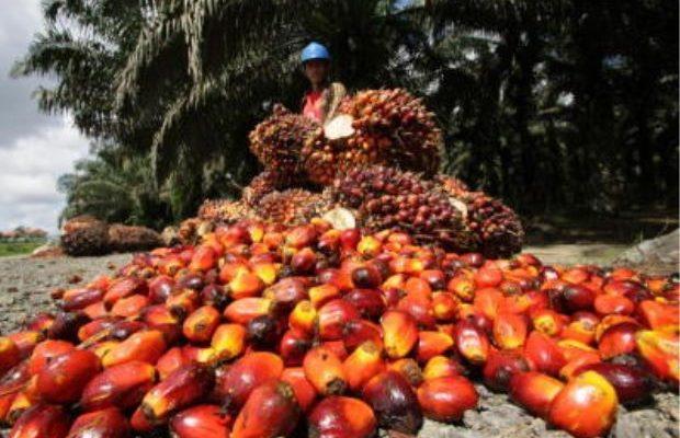 Okomu Oil Palm Nets N7.24bn Profit, Amidst Sluggish Revenue Growth